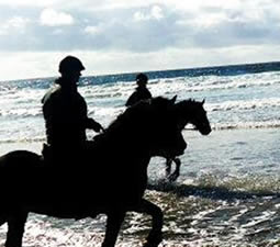 Horses from Island View Riding  Stables in the water at Streedagh Beach