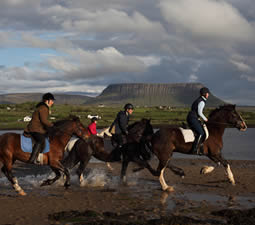 Horses galloping on beach with Benbulben in background