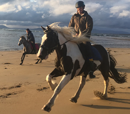 One and a half hour ride on beach