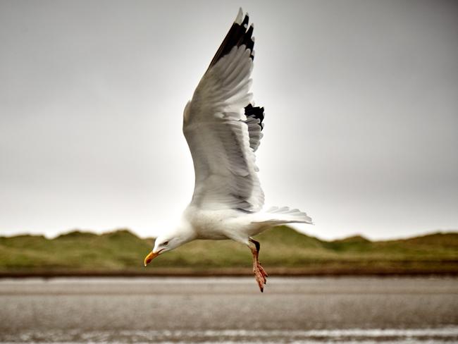 Seagull on O Connors Island